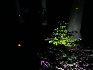 Schatzsuche bei Nacht - Markierung mit Knicklichtern